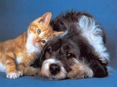 Amiti chat chien chat et chien sur chat - Photo de chien et chat mignon ...