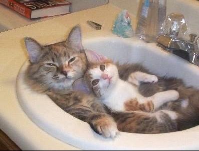 bain pour chat