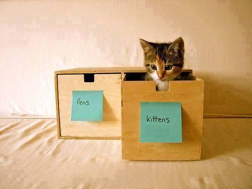 boite à chat