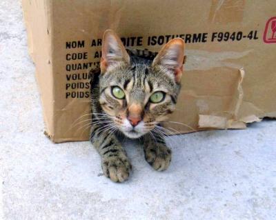carton et chat