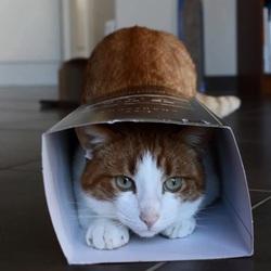 carton pour chat