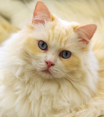 Cane chat beige  La Petite Epicerie