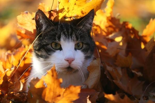 Résultat d'images pour Photos chat automne