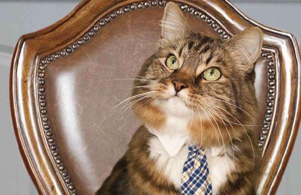 chat avec cravate