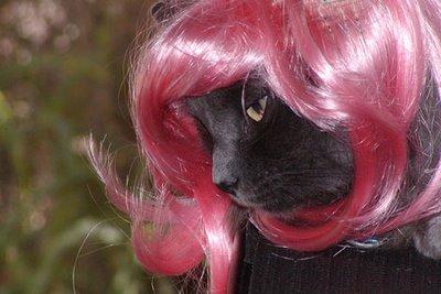 chat avec perruque