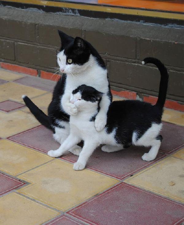 chat avec son chaton