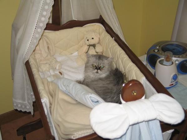 chat berceau bébé