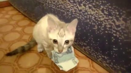 chat billet
