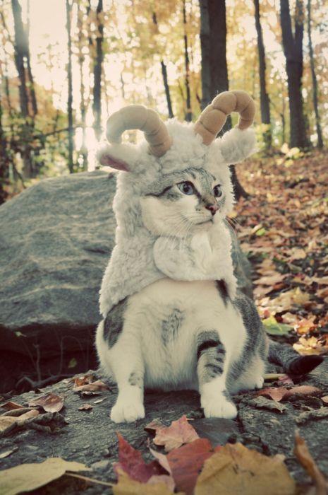 chat bouc