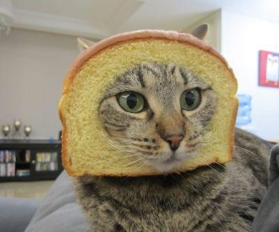 chat brioche