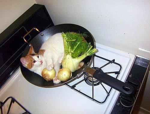 chat cuisiné