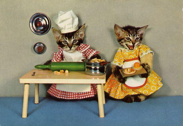chat cuisinier chat d guis sur chat. Black Bedroom Furniture Sets. Home Design Ideas