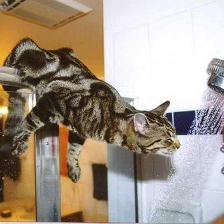 chat dans la douche
