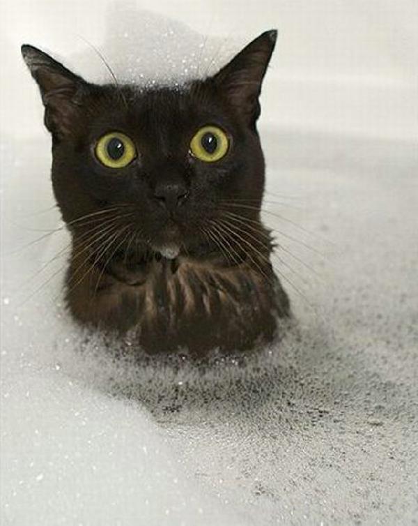 chat dans le bain
