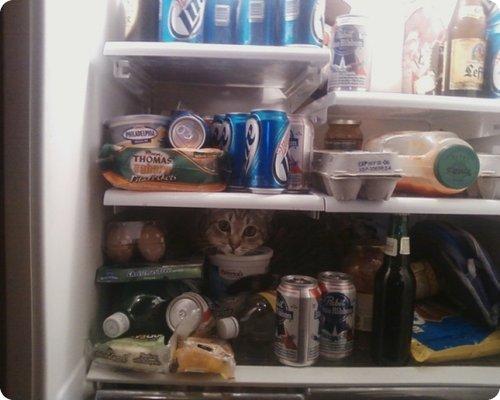 chat dans le frigo