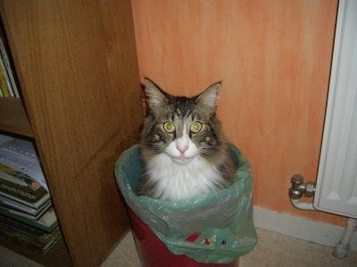 chat dans poubelle