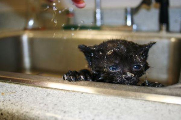 chat dans son bain chat dr le sur chat. Black Bedroom Furniture Sets. Home Design Ideas