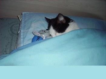 chat dans son lit