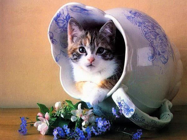 chat dans vase