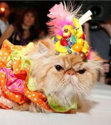 chat danseuse