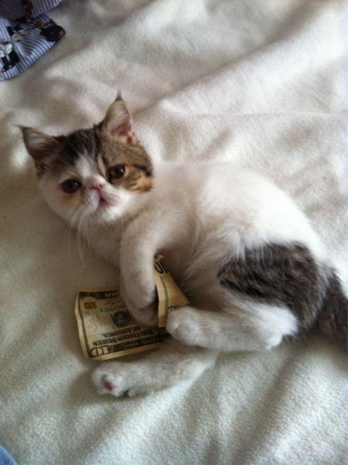 chat dollars