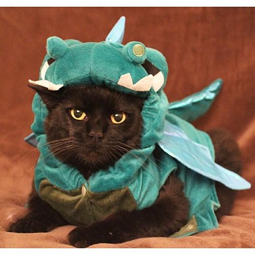chat dragon