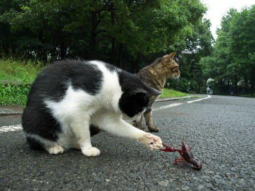 rencontre entre chien chaton