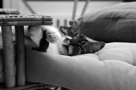 chat en noir et blanc