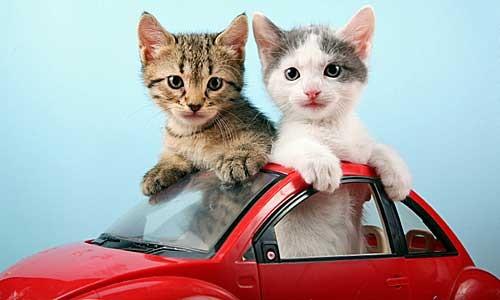 """Résultat de recherche d'images pour """"voiture chat"""""""