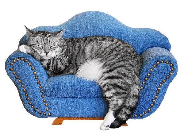 chat et canap chat en plein r ve sur chat. Black Bedroom Furniture Sets. Home Design Ideas