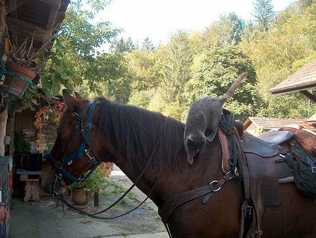 Je veux cette photo Chat-et-cheval