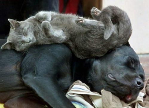 chat et chien drole