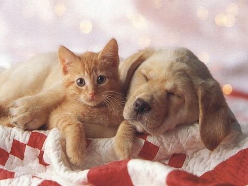 chat et chien endormi chat et chien sur chat. Black Bedroom Furniture Sets. Home Design Ideas