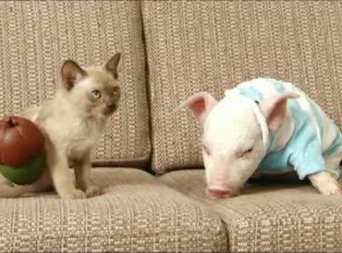 chat et cochon