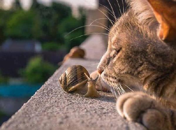 chat-et-escargot.jpg