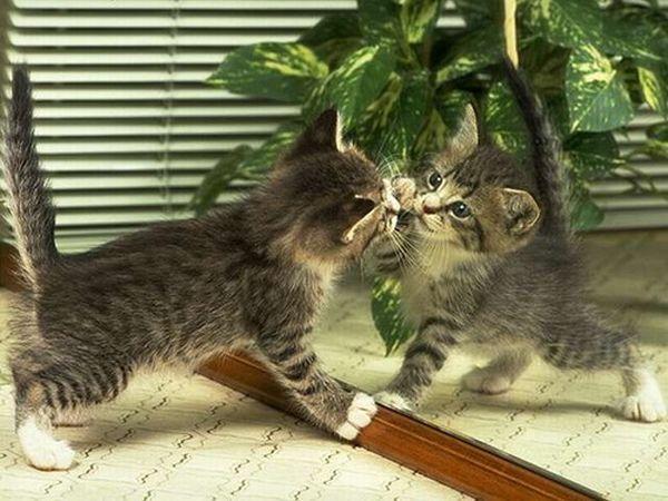 Chat et miroir chat dr le sur chat for Miroir des chats