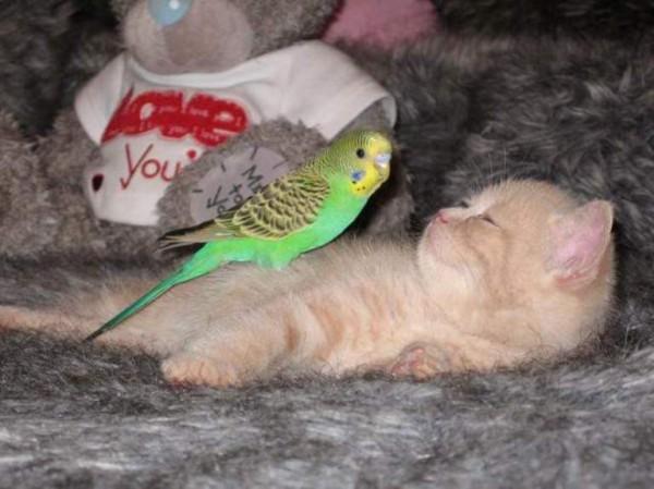 Chat et perruche