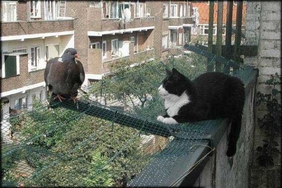 chat-et-pigeon