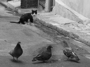 chat et pigeons
