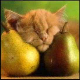 chat et poires