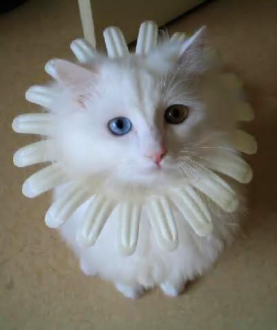 chat fleur