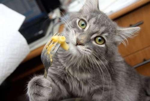 chat fourchette