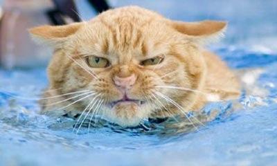 Chat Furieux chat furieux - chat drôle sur chat-mignon