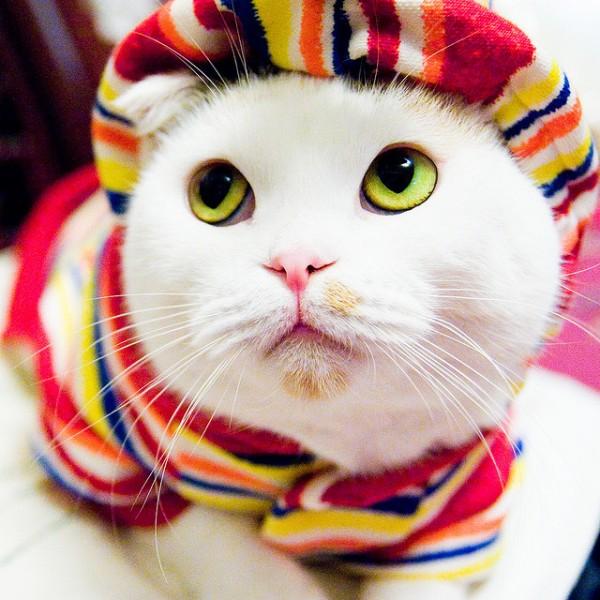 chat habillé