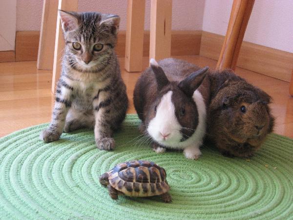 saint louis chat » perdu mon chat à kembs loechl  68300 saint-louis adresse courriel : ludogcat@lapostenet l'association de ludogcat regio,.