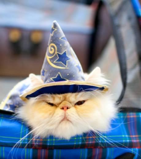 chat magicien