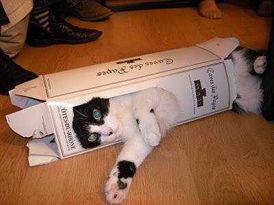 Chat marrant chat dr le sur chat - Chaton marrant ...