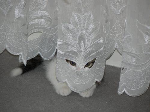 chat masqué