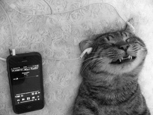 chat mélomane