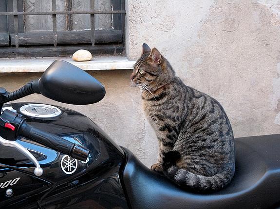chat moto chat dr le sur chat. Black Bedroom Furniture Sets. Home Design Ideas